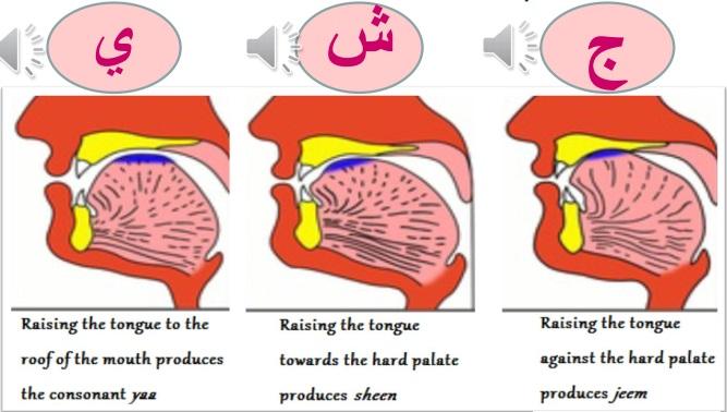 quran online, pillars of islam, quran, online quran classes, learn quran recitation online,